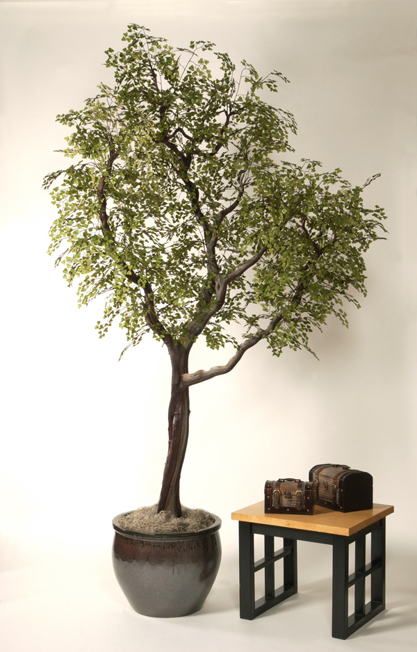 Silk Plants Permanent Botanicals Tree Black Olive On Manzanita 8